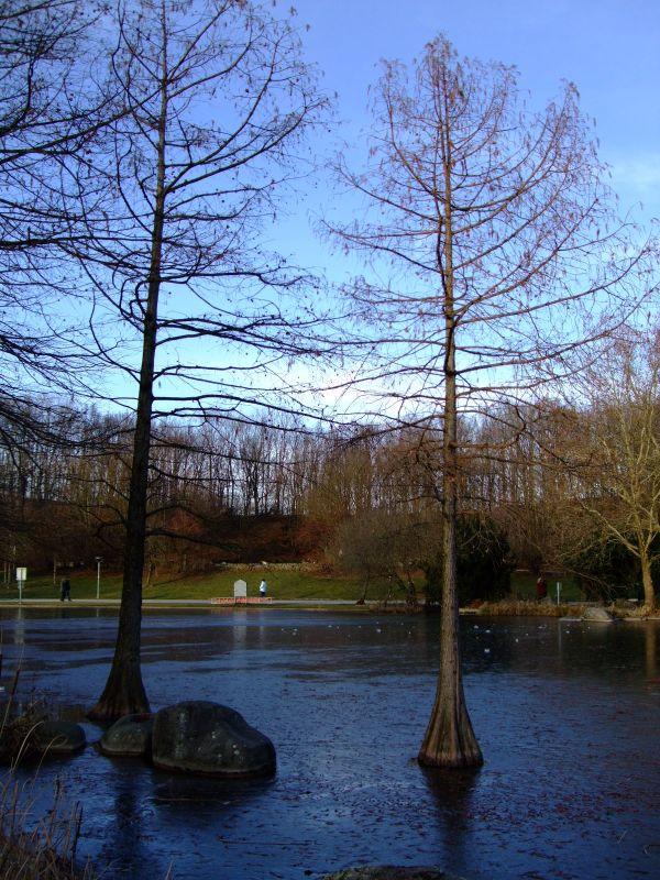 Mangroven in Deutschland?