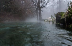 The Warmbach - a thermal creek in Villach, Austria being home of tropical plants and fish in the alps.