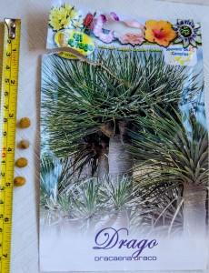 Drachenbaum Dracaena Draco - Samen und Verpackung