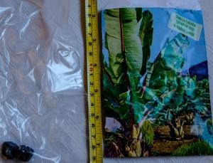 Musa Ensete ventricosum - Verpackung und Samen 1